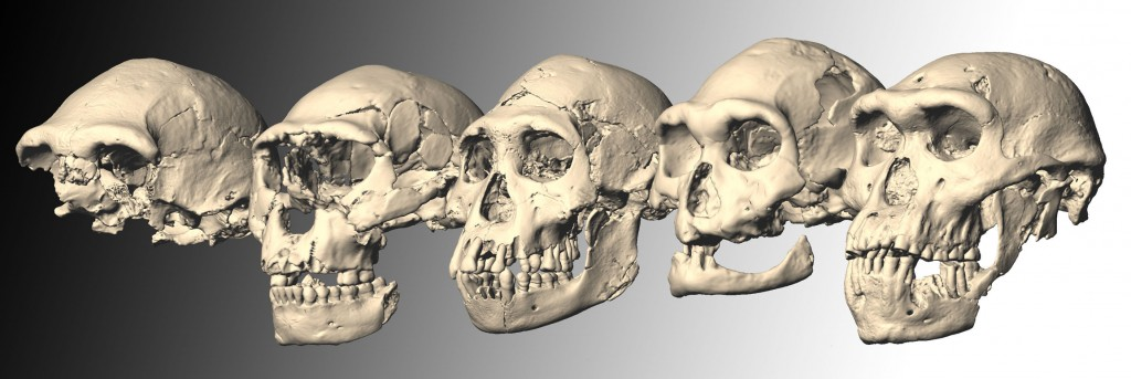 I crani di Dmanisi. Foto: sciencemag.org